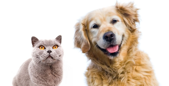 Lovely diabetes in dogs and cats together with diabetes in dogs & cats | about diabetes mellitus